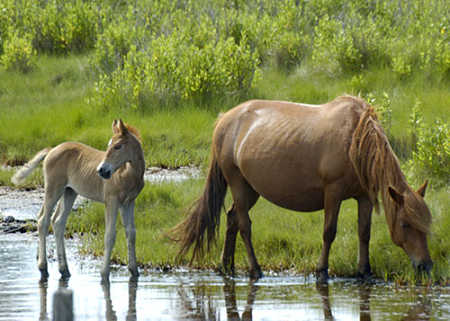 assateague_island.jpg