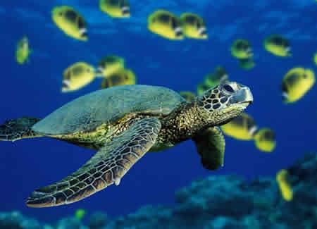 Proyecto Tamar - Tortugas Marinas + Fotos Propias