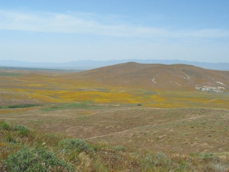 Reserva Amapolas de California