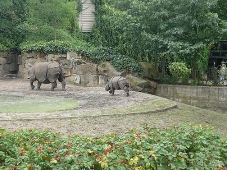Tierpark Berlín