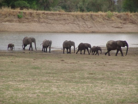 Parque Nacional Luangwa Sur