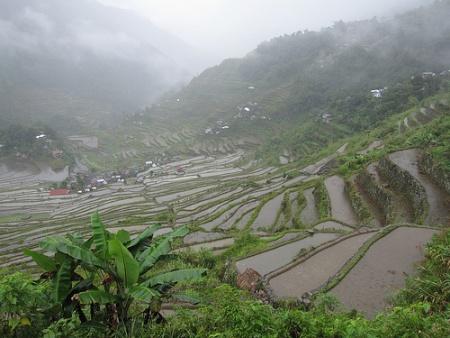 Arrozales en terrazas Filipinas