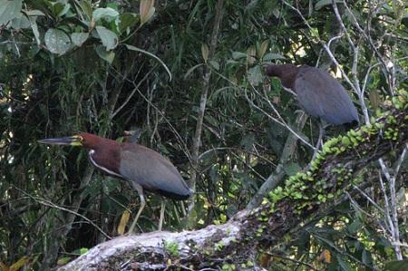 Reserva Cuyabeno