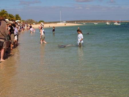 Bahía Shark