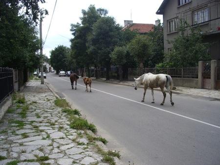 Samokov