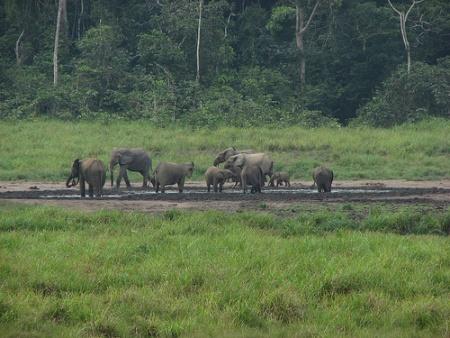 Parque Loango