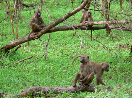 Reserva Monte Mimba