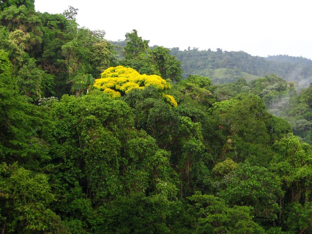 bosques costa rica 1