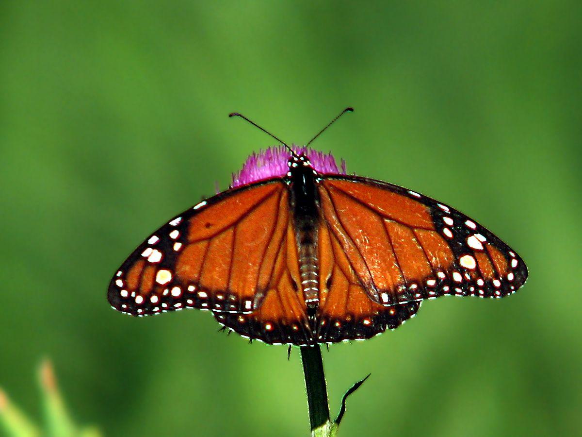 santuario-mariposa-monarca-1