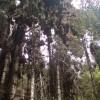 santuario-mariposa-monarca-3