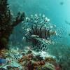 Espectaculares fondos marinos