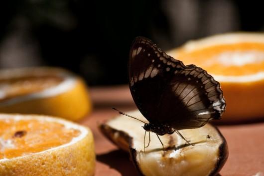 Granja de Mariposas de Aruba 1
