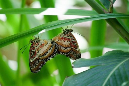 Granja de Mariposas de Aruba 5