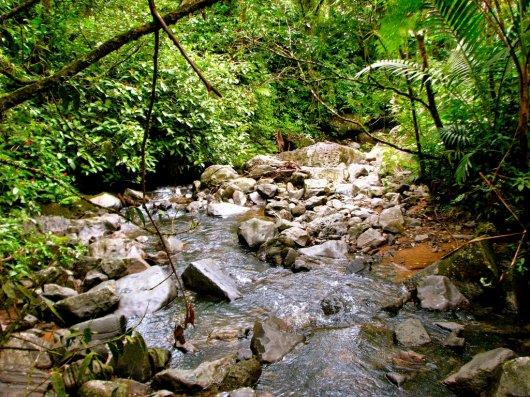 Bosque El Yunque 2
