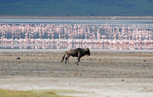 Ngorongoro 6
