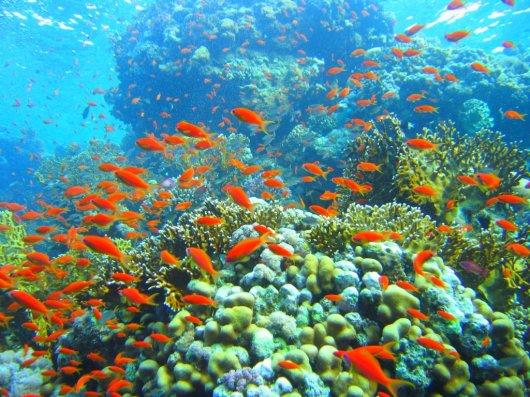 Arrecife Yolanda 1