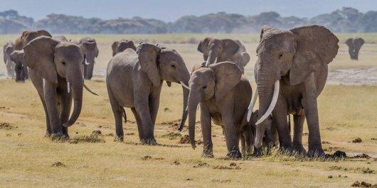 Parque Amboseli 1