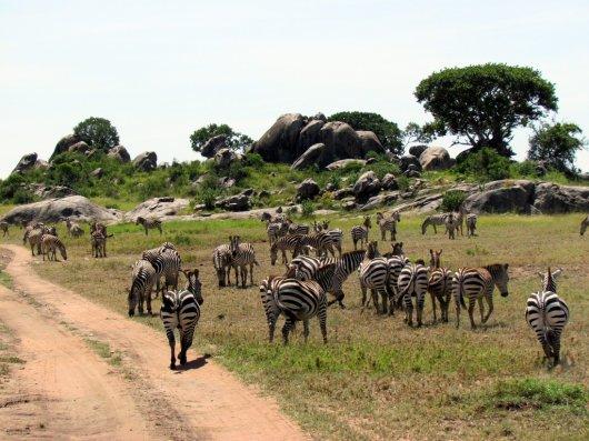 Safari Kenia y Tanzania 4