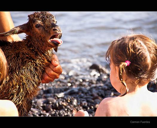 baño de cabras