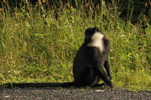 Parque del Bosque Nyungwe 2