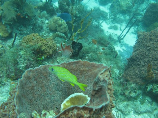 Buceo en Republica Dominicana 5