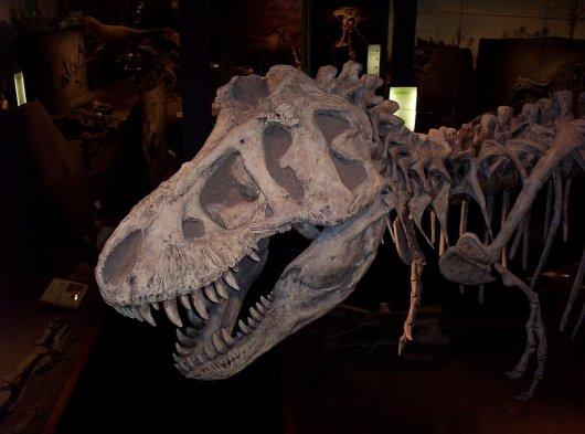 Parque de los Dinosaurios 3