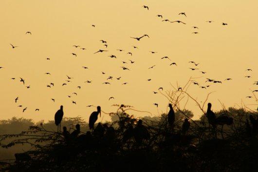 Parque Sultanpur 1