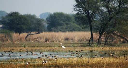Parque Sultanpur 3