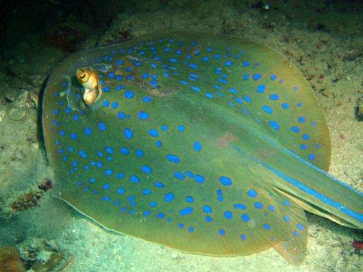 Buceo en las Islas Perhentian 6